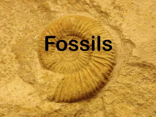 introduction fossils by emmaushead teaching resources tes