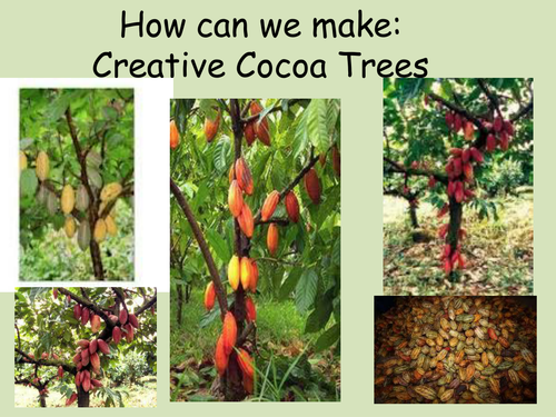 Creative cocoa trees by rubyru22 teaching resources tes sciox Image collections
