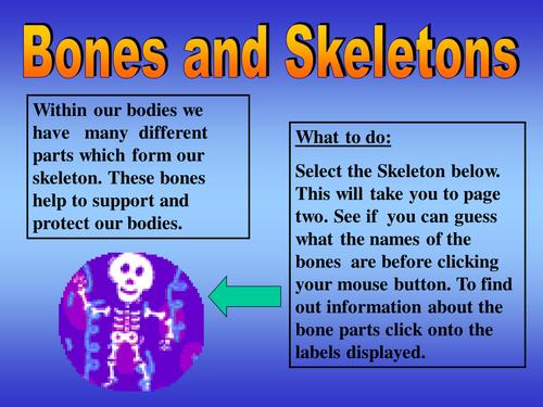 Science year 3 Skeletons