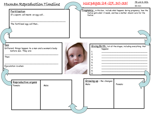Human Reproduction Timeline By S Holmes12 Teaching