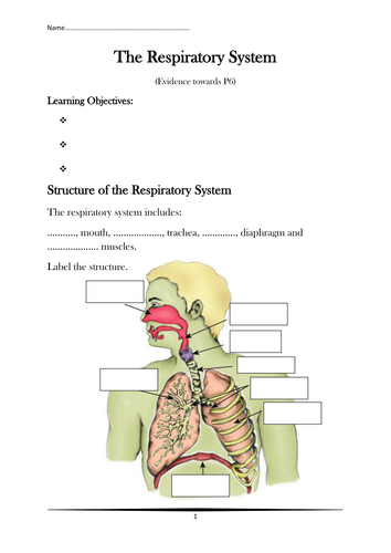 Respiratory system diagram to label by hephelumps teaching respiratory system diagram to label by hephelumps teaching resources tes ccuart Image collections