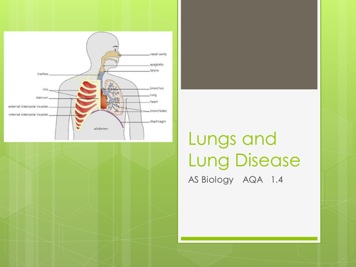 AQA 3.1.4 [AS Biology] - Lungs and Lung Disease