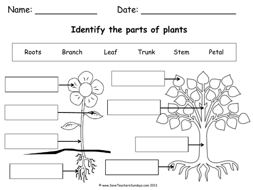 Parts of a Plant & Parts of a Tree Worksheet & Lesson Plan