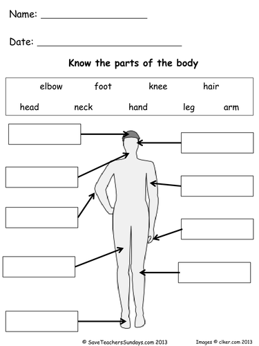 Parts of the Body lesson plan and worksheets by ...
