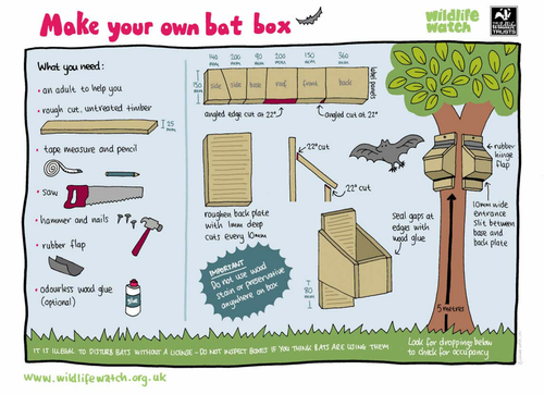 How to make a bat box by rspb teaching resources tes for How to make a bat house free