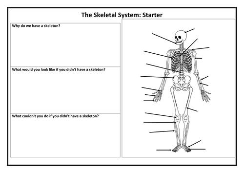 the skeletal system by jon dudbridge teaching resources. Black Bedroom Furniture Sets. Home Design Ideas
