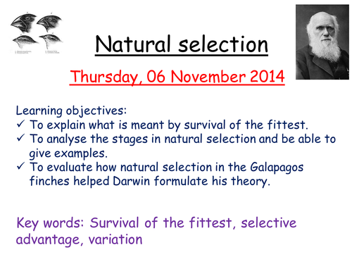 Natural Selection Practical By Zuba102 Teaching Resources Tes