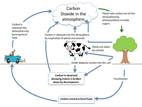 Carbon cycle by itegallagher Teaching Resources TES – Carbon Cycle Worksheet
