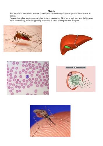 Malaria worksheets + staff ans