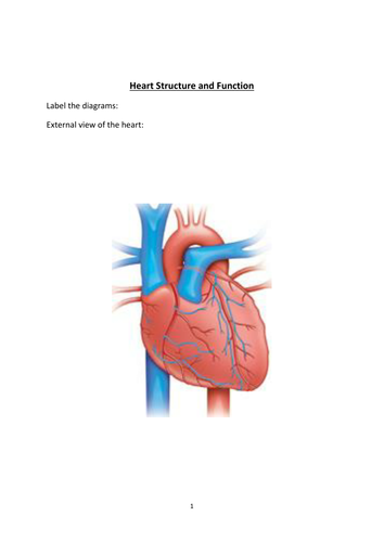 AS Heart structure worksheets, presentation, quiz by ClickBiology ...
