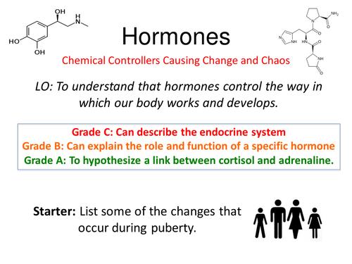 Hormones Tutorial & Activities