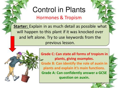Control in Plants (Tropism)