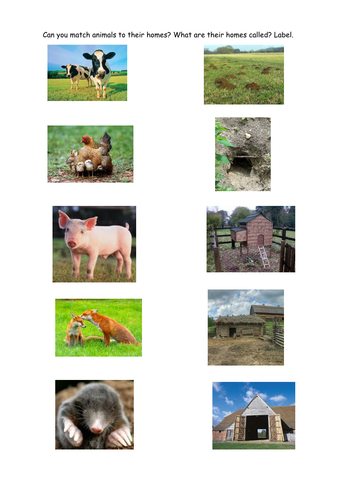Match Animals To Their Homes Teaching Resources