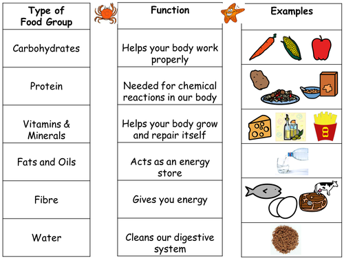 Intro to Food Groups and differentiated worksheets by seasquirt – Healthy Food Worksheets