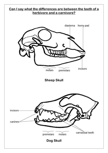 Teeth And Eating Resources 6408784 on Drawing Worksheets For High School