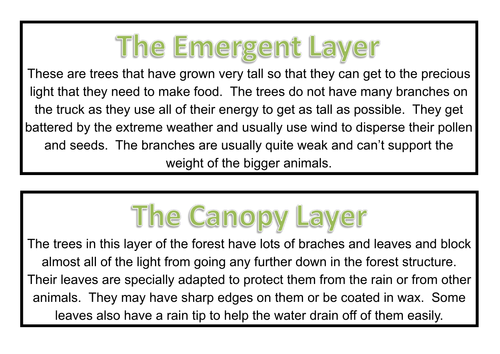 Rainforest Topic Planning Resources Part 1 by paris0504 – Layers of the Rainforest Worksheet