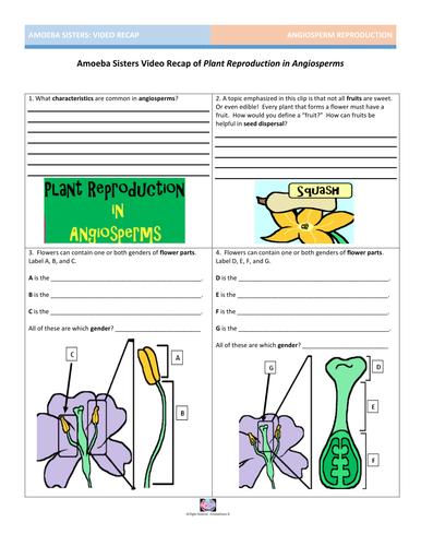 Amoeba Sisters Worksheets - Geotwitter Kids Activities