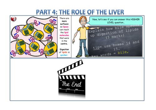 The role of the liver and bile