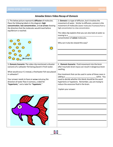 Worksheets Osmosis Worksheet Answer Key osmosis a solute and solvent love story by amoebasisters teaching resources tes