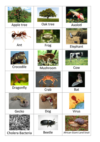 Classification Of Living Things Card Sort Activity 6425292 on Animal Groups Worksheet