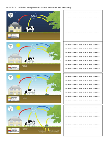 Differentiated Carbon Cycle Revision Worksheet By