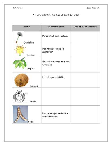 seed dispersal worksheet by cheryl87 teaching resources. Black Bedroom Furniture Sets. Home Design Ideas