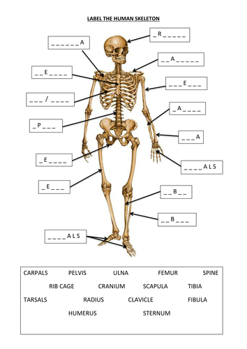 Label The Human Skeleton By 20008496 Teaching Resources Tes