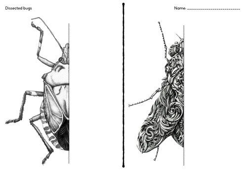 Art Handouts And Worksheets : Insect drawing by chriselkin teaching resources tes