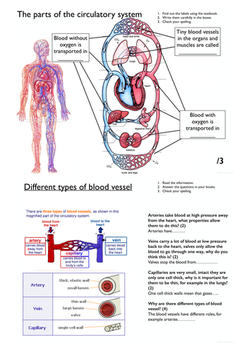 Blood Vessels worksheet KS3