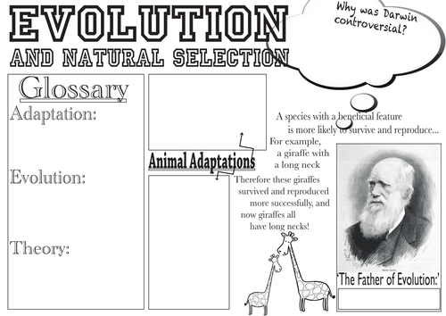 Evolution and Natural Selection Poster by katielu Teaching – Evolution Worksheet