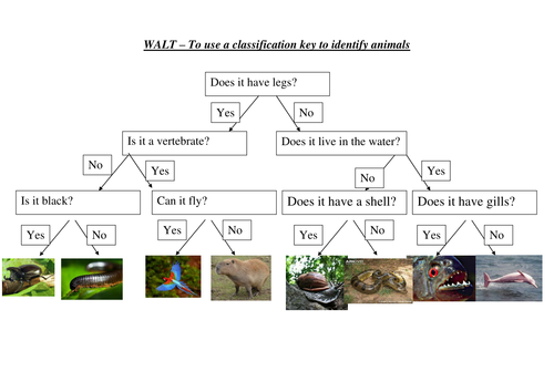 Rainforest Classification Keys By Emilyf1990 Teaching Resources Tes