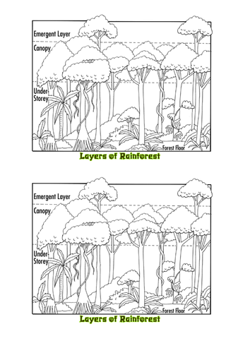 Rainforest Location & Wildlife Adaptation Lesson by