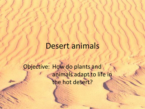 Desert Animal And Plant Adaptations By Emmabutterworth Teaching
