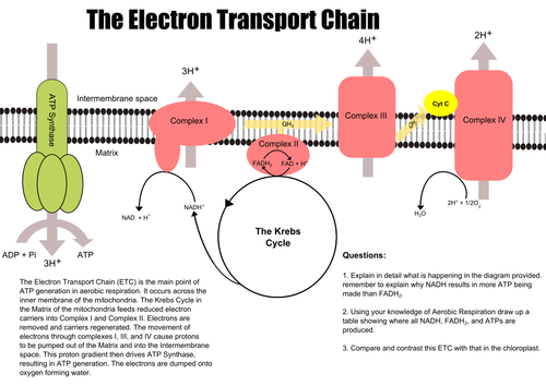 The electron transport chain by redundantdna teaching resources tes ccuart Choice Image