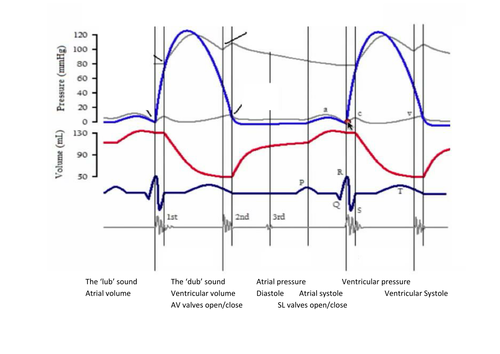 Label Cardiac Cycle Graph By Miss Tee Teaching Resources Tes