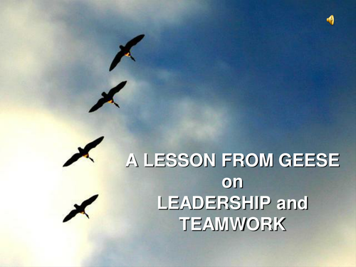 Teamwork -  A Lesson from Geese