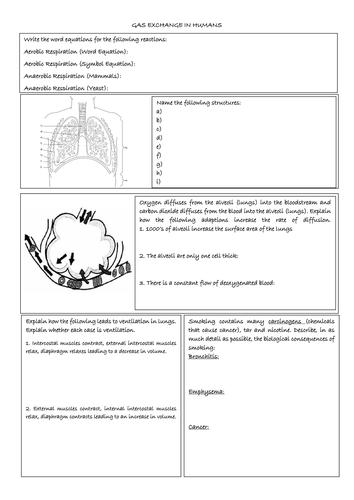 Xylem And Phloem Worksheet