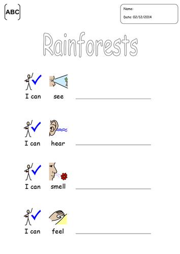 Rainforest poem template