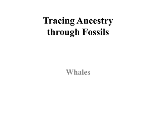 Tracing Ancestry Through Fossils: Whales