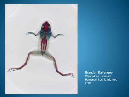 Brandon Ballengee
