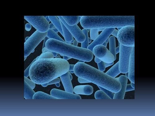 Bacteria PP