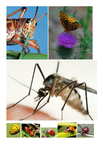 INSECTS HELPSHEETs