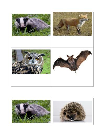 Nocturnal animal bingo