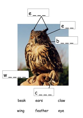 Owl Babies labeling