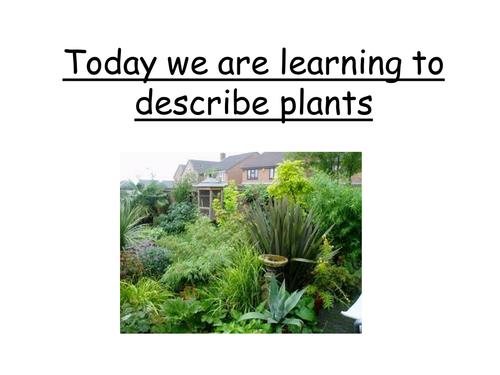Describing Plants - using adjectives
