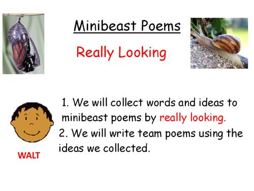 Mini-beast poems-teacher modeling