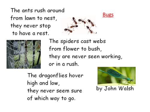 Bug Poems