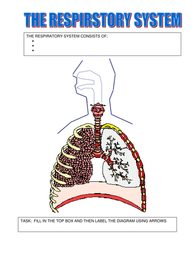 Respiratory system by ilovepe teaching resources tes ccuart Image collections