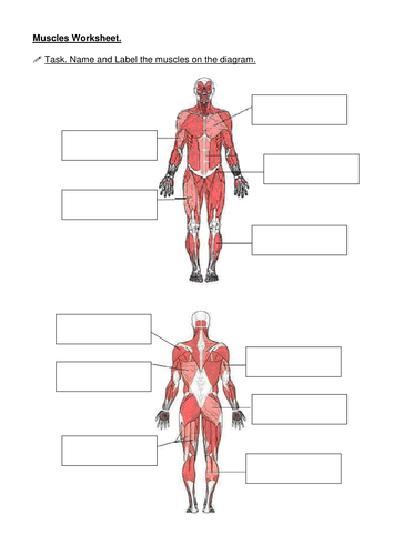Muscles     name the    muscle    by becksarmstrong   Teaching Resources