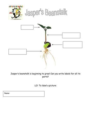 'Jasper's Beanstalk' - labeling plants